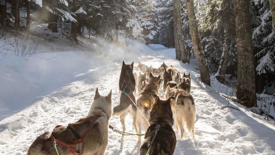 Dog sled ride when you go spring skiing