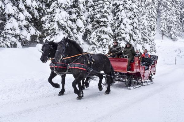 horse sleigh, snow, skiing